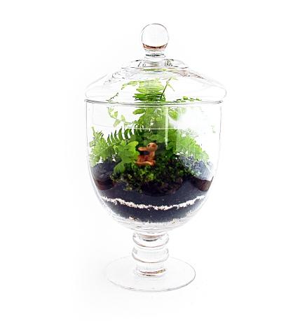 terrarium-vase